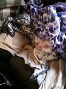 Phoebe Sleeping